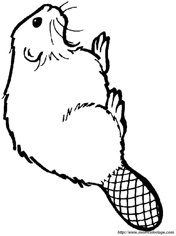 Colorare Altri Animali Disegno Castori 15