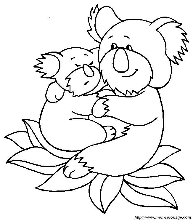 colorare altri animali disegno koala 2