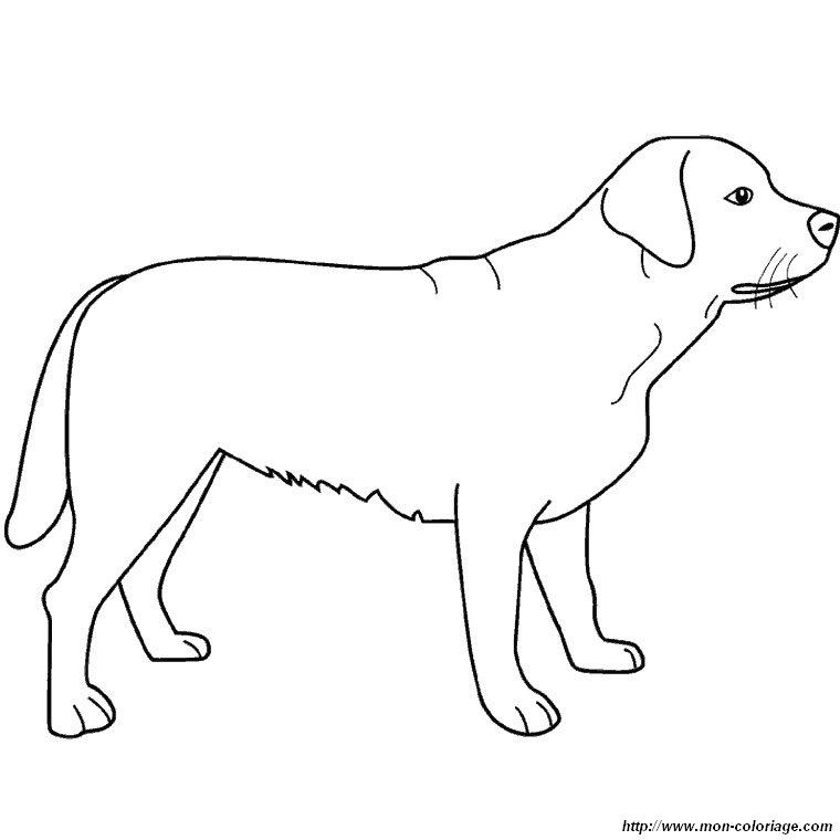 Colorare cane disegno labrador in piedi for Cane disegno facile