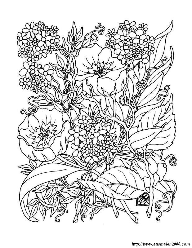 disegni da colorare fiori di campo