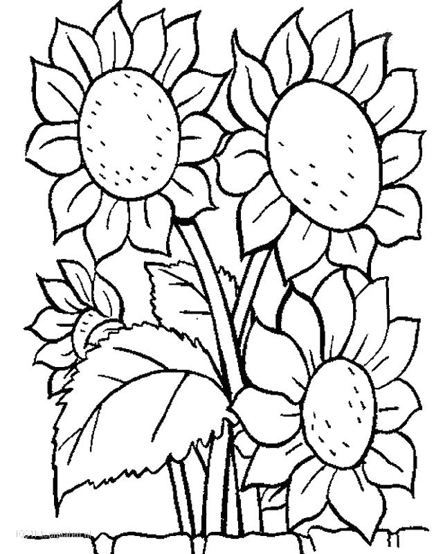 Eccezionale Colorare Fiore, disegno Quattro girasoli TK86