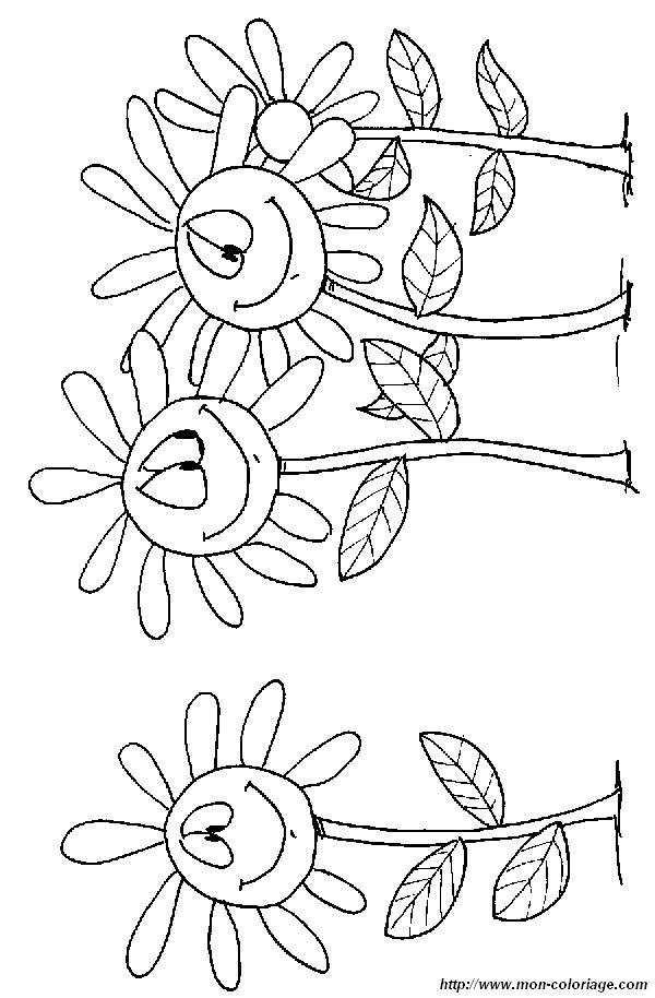 Colorare fiore disegno margherita - Coloriage marguerite ...