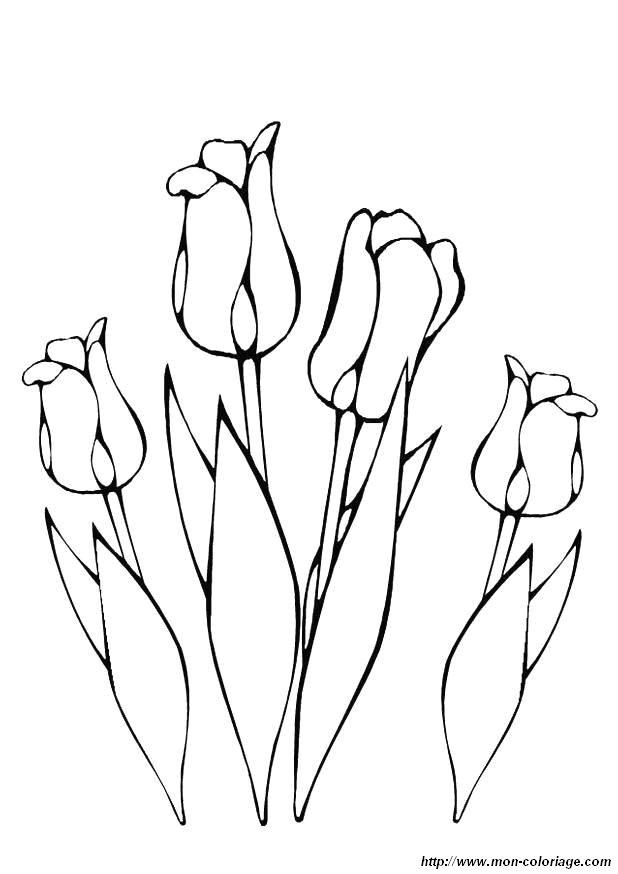 Colorare Fiore Disegno Tulipano