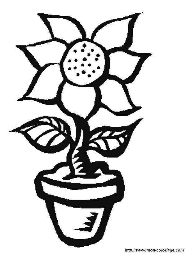 Colorare Fiore Disegno Vaso Fiori