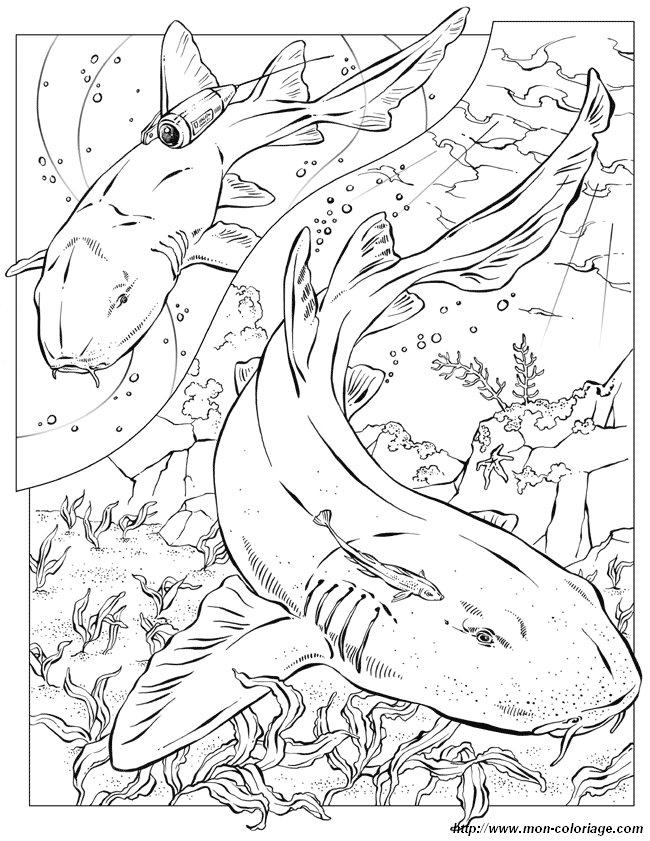 Colorare per insegnante disegno squalo 2 for Squalo bianco da colorare