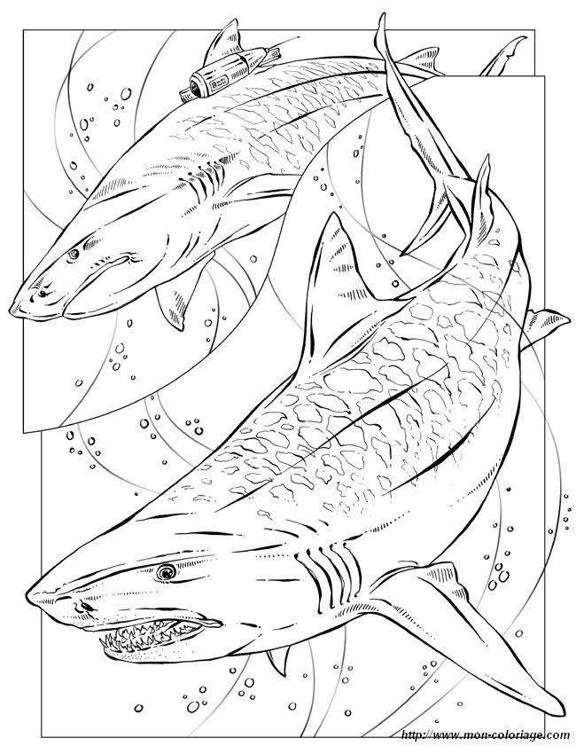 Colorare per insegnante disegno squalo tigre for Squalo da colorare