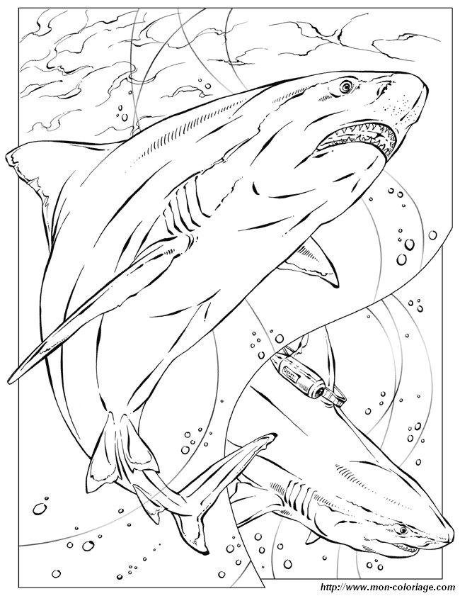 Colorare per insegnante disegno squalo for Squalo da colorare