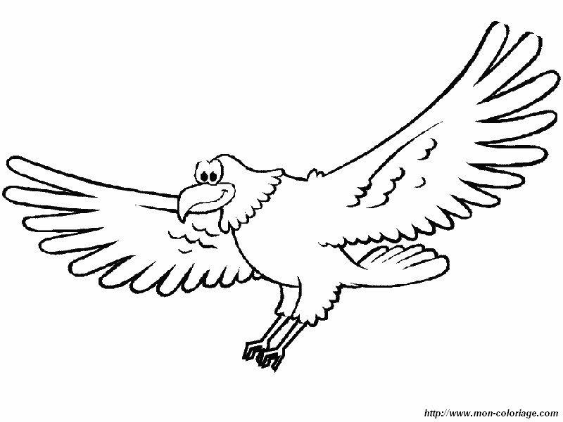 Colorare Uccello Disegno Aquila Felice