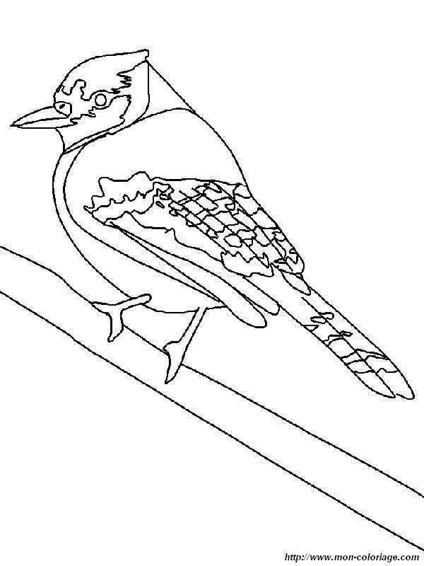 colorare uccello  disegno corvide del bosco