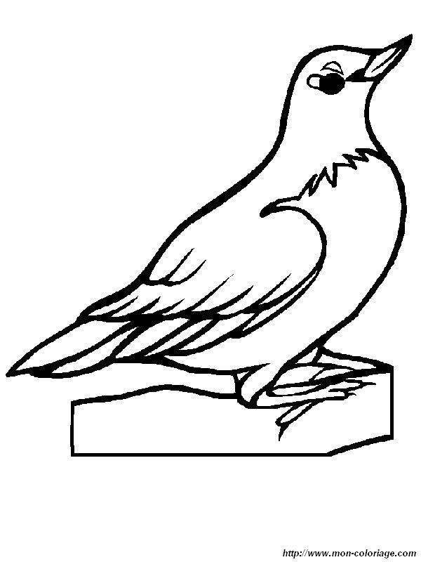 Colorare uccello disegno pettirosso for Idaho state bird coloring page
